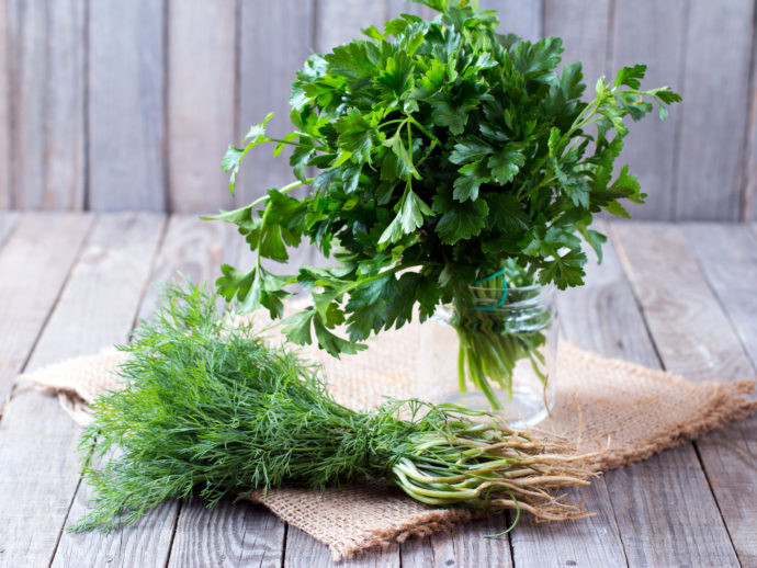 7 Summer Herbs You Have to Try